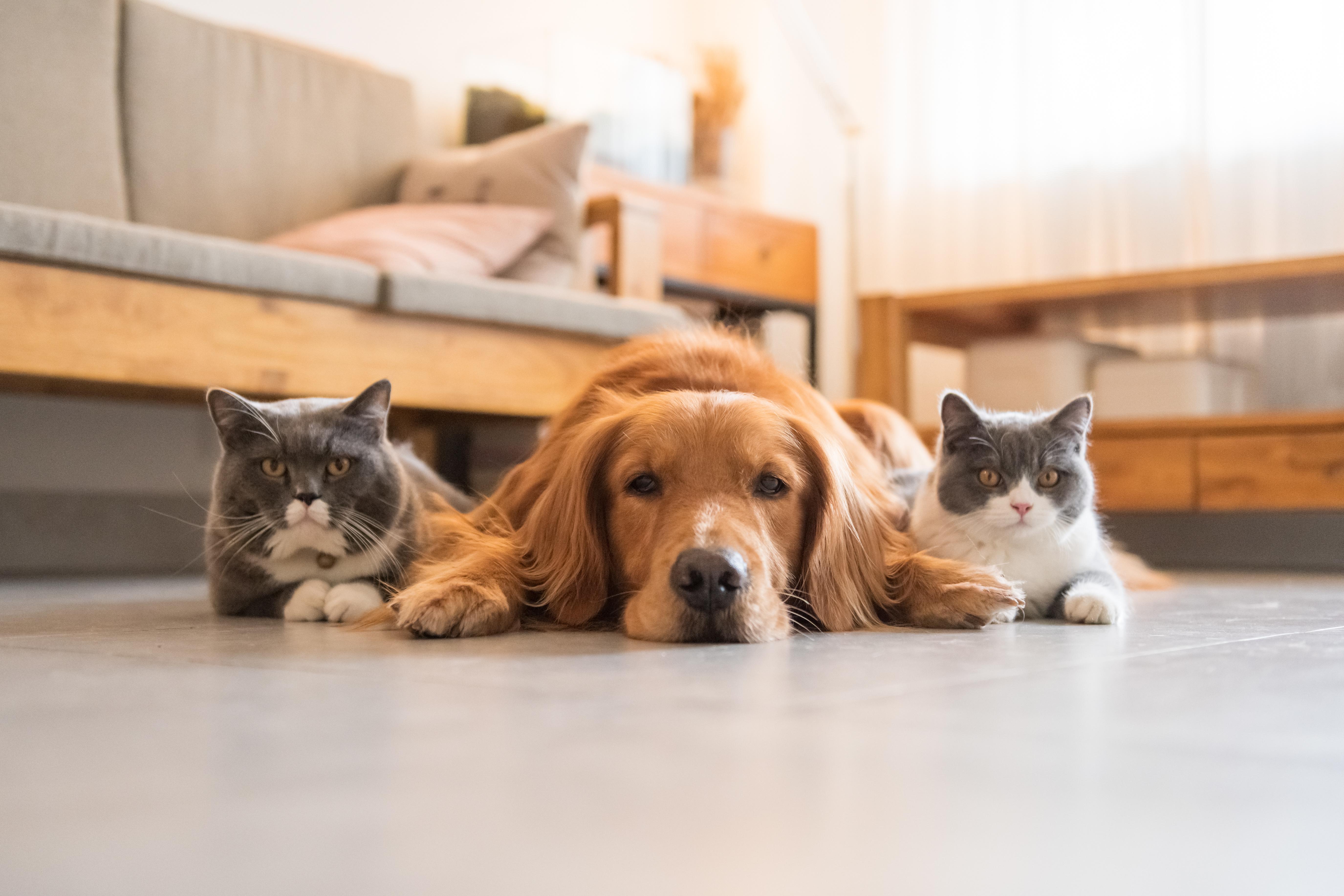 ペットと暮らす方におすすめしたい 腰壁 リフォーム 中央区の